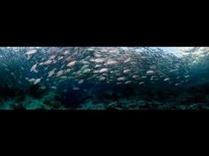 Sipadan island diving Diving, Island, Friends, World, Videos, Wish, Places, Amigos, Scuba Diving