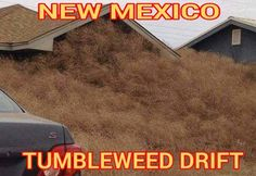 funny new mexico pic New Mexico Homes, New Mexico Usa, Clovis New Mexico, Hobbs New Mexico, New Mexican, Mexican Stuff, Albuquerque News, Funny New, Funny Stuff