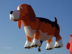 Awww, a beagle