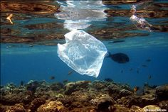 5 Myths (and Truths) About Plastic Pollution in Our Ocean.