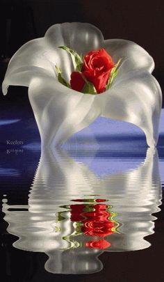Gifs Hermosos Lindas Flores Encontradas En La Web
