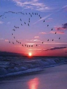 """Sunrise flock of birds """" Can u see the heart shape valentine luv"""" Can now fee the love Sharon"""" Beautiful World, Beautiful Places, Beautiful Pictures, Beautiful Sunset, Heart In Nature, Flock Of Birds, Air Birds, Birds In The Sky, Flying Birds"""