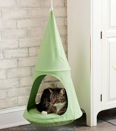 Cat hammock #cattrainingplays