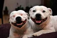 Look at our heads what do u see? U see two heart shaped heads. Love pitbulls dont hate them Love Your Dog? Visit our website NOW!