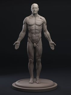3D Total Anatomy Figure