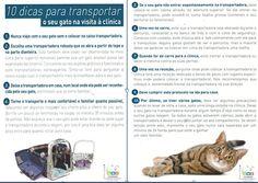 10 dicas para transportar o seu gato ao veterinário