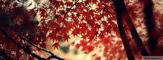 Autumn Tree Facebook Covers, All New Facebook Cover Photos For Your Timeline