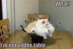 Haha.. For u @Porcha Maten #catlover