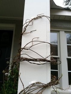 Use command strips to make confederate jasmine grow up a column!