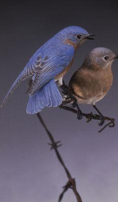 male and female bluebirds Clay Birds, Ceramic Birds, Pet Birds, Wood Carving Designs, Wood Carving Patterns, Wooden Bird, Bird Crafts, Bird Sculpture, Bone Carving