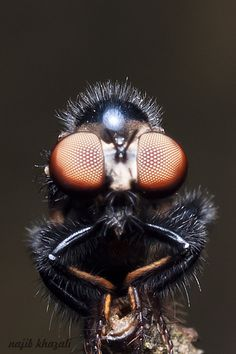 #fly #insect #macro