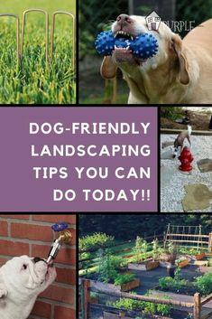 Dog Friendly Garden Landscaping Tips. Inspirational Dog Friendly Garden Landscaping Tips. Dog Friendly Plants, Dog Friendly Backyard, Dog Backyard, Backyard Privacy, Dog Playground, Backyard Playground, Dog Garden, Landscaping Plants, Landscaping Ideas