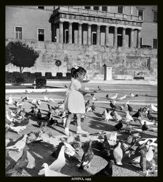 1955 ~ Feeding the pigeons at Syntagma Vintage Photographs, Vintage Photos, Athens History, Greece Photography, Athens Greece, Ancient Greece, Greek Islands, Back In The Day, Old Photos