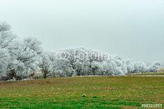 kış mevsimi başlarında görülen kırağı manzarası