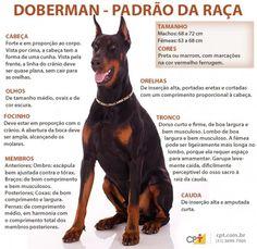 Padrão da raça Doberman