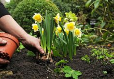 Checklist of 6 essential gardening chores you should do before the end of February. Must see!
