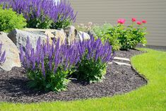 Low maintenance landscaping plants low maintenance outdoor plants and flowers designs contemporary garden low maintenance gardening tips 5 for a cost garden Landscaping With Rocks, Landscaping Plants, Front Yard Landscaping, Landscaping Ideas, Landscaping Borders, Acreage Landscaping, Inexpensive Landscaping, Landscaping Supplies, Outdoor Landscaping