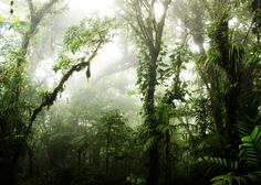 Our artists: Nicklas Gustafsson - Cloudforest - www.customly.com