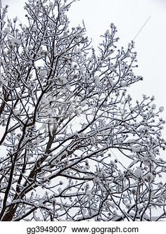 """Limb of trees in Winter forest"" - Winter Stock Photo from Gograph.com"