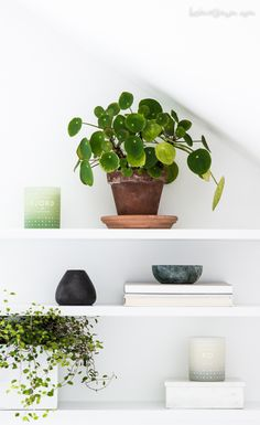 Urban Jungle Bloggers: Plantshelfie 2 by @heimatbaum