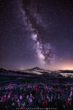 Celestial Existence | Milky Way, Lupine and Indian Paintbrush, Goat Rocks Wilderness, Mount Rainier National Park, Washington | by Scott Smorra