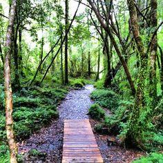 Parque Nacional Alerce Andino w Puerto Montt, Los Lagos