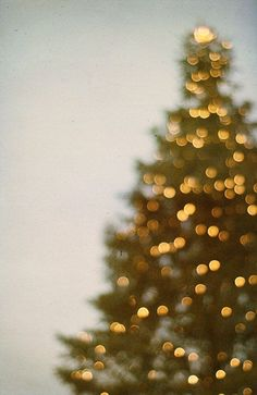 Five Favorite Pins – Tree Lighting – Christmas Tree Lights | saltandwind.com #saltandwind