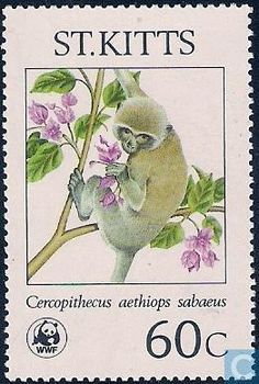 Endangered Species - Green Monkeys on St. World Thinking Day, Mammals, Primates, Love Stamps, Small Art, Fauna, Stamp Collecting, St Kitts And Nevis, Postage Stamps