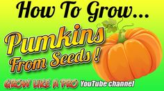 How To Grow Pumpkins From Seeds By GrowLikeAPro Grow Pumpkins From Seeds, Pumpkin Garden, Vegetable Gardening, Planting, Channel, Watch, Twitter, Youtube, Veggie Gardens