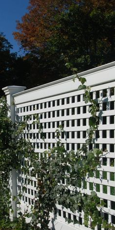 Chester Square Lattice fence is a great solution for a semi privacy fence or to add a decorative touch to you garden or landscape. Cheap Privacy Fence, Privacy Fence Designs, Patio Fence, Garden Privacy, Backyard Privacy, Backyard Fences, Garden Fencing, Backyard Landscaping, Screened Patio