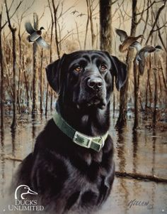 This Black Labrador Retriever Hunting Dog Tin Sign features a vintage-style reproduction graphic. Made in the USA. Great metal sign for a hunting or shooting cabin. Labrador Retrievers, Black Labrador Retriever, Hunting Art, Duck Hunting, Hunting Dogs, Schwarzer Labrador Retriever, Labrador Noir, Ducks Unlimited, Hunting Supplies