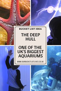 The Deep in Hull. One of the biggest aquariums in the UK. Great family day out. Family Days Out Uk, Days Out With Kids, Bucket List Life, Bucket List Family, Travel With Kids, Family Travel, Travel Uk, The Deep Hull, Days Out In Yorkshire
