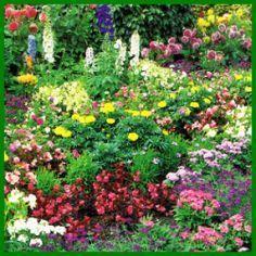 Nice Schmetterlingsgarten eine Oase f r Schmetterlinge