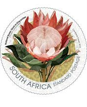 The giant or king protea is widely distributed in the south western and southern areas of the Western Cape, from the Cedarberg up to east of Grahamstown.