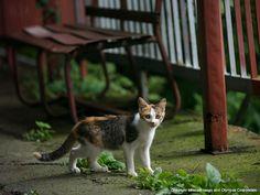日本-3   ネコギャラリー   デジタル岩合 動物写真家・岩合光昭氏 公認サイト