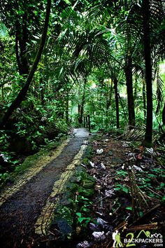 Things to do in El Yunque Rainforest -another informative post regarding hiking trails