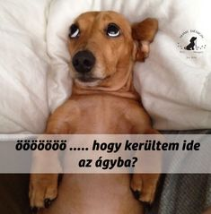 Beagle, Animals And Pets, Funny Quotes, Dogs, Wifi, Happy, Animal Pictures, Humor, Pets