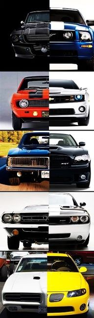 Muscle Evolution