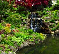 landscape ponds - Google Search