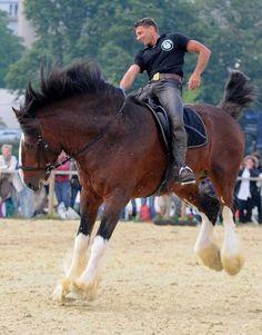 That's a big horse! He's enjoying himself:)