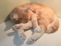 My #Osmo #cat #sleeping #capnap by pauliinamakela