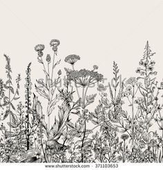 pen ink floral border - Google Search