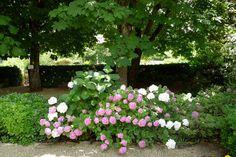 Villa le Barone: Hydrandeas on a  terrace