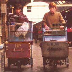 Imagen de harry potter, ron weasley, and hogwarts Harry Potter World, Agenda Harry Potter, Mundo Harry Potter, Harry Potter Tumblr, Harry Potter Universal, Harry Potter Movies, Harry Potter Ron Weasley, Harry Potter Friendship, Harry Potter Magic
