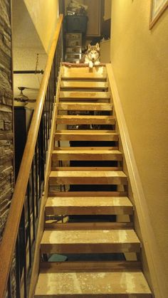 No more carpet and we have added a stopper board to every tread, so we can enclose the stairs. Stair Makeover, Pink Carpet, Wood Laminate, Rug Runner, Stairs, Canning, Board, Home Decor, Stairway