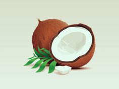 Coconut by Julian Burford #Design Popular #Dribbble #shots