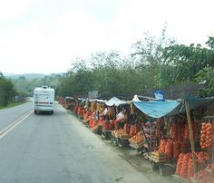 Fruit stands are everywhere in MX
