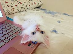 My friend's cat-Rangvangi