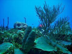 Underwater reef diving in Negril, Jamaica with #scubadivejamaica