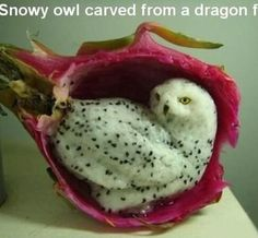 Dragon Fruit carving of an Owl!! This is ridiculously good!! I can see me trying this and ending up being one of the 'nailed it' fails on Pinterest, it'd be a big messy blob of 'something', but definitely not an owl, hahaha.